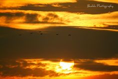 #sunset #peace #love #nature #beaty #photography #birds #freedom