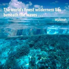 Wyland beneath the waves ♥♥♥ ocean wildlife