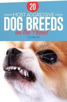 20 Most Aggressive Dog Breeds Aggressive Dog Breeds Aggressive