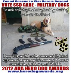 Gabe - War Dog Hero <3