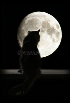 Photo about Photo with cat and full moon. Image of full, moon, animal - 4315846 Night Pictures, Image Cat, Domestic Cat, Full Moon, Cat Art, Mammals, Stock Photos, Portfolio Website, Cat Stuff