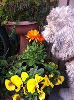 玄関先のお花をクンクン