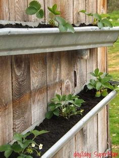 Looking for ideas for small garden? Why not try rain gutter garden ideas? Check out these clever vertical rain gutter garden ideas. Gutter Garden, Herb Garden, Garden Bed, Easy Garden, Diy Gutters, Edible Garden, Green Life, Dream Garden, Garden Projects