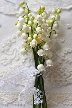 Lily of the Valley!