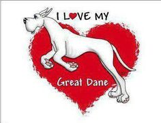 New dogs and puppies great dane life ideas Lap Dogs, Dogs And Puppies, Doggies, Weimaraner, Harlequin Great Dane Puppy, Dog Treat Packaging, Dog Tumblr, Deaf Dog, Great Dane Dogs