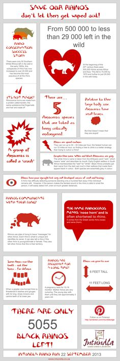 Save the Rhino Endangered Animals Facts, Rhino Poaching, Elephant Facts, Shark Facts, Save The Rhino, Game Lodge, Animal Facts, Rhinoceros, Show And Tell