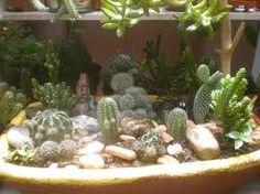 Resultado de imagen para cuidar cactus en maceta
