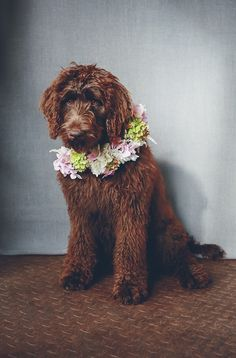 Flowertalk | I Heart Weddings Photography