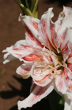 Lillies....ones of my favorite flowers. So many different types.