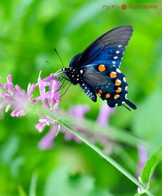 #nature - butterflies