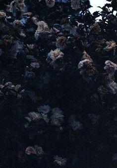 Romantic dark florals