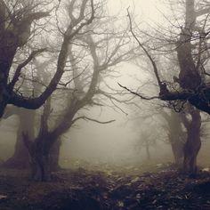 """""""Walnut Forest IV"""" in Evia, Greece, photographed by Vangelis Bagiatis (VBagiatis @ deviantART.com) (© 2011)."""