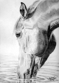 40 Realistic Animal Pencil Drawings