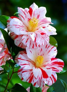 flores ♥