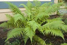 Image result for ferns
