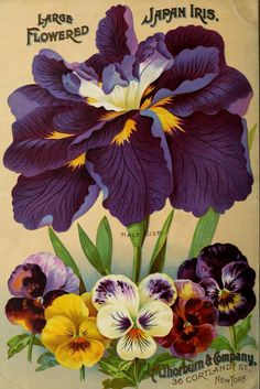 """heaveninawildflower: """" Back cover of J. Thorburn & Co 'Bulbs for Fall Planting' 1904 catalogue with an illustration of Large-flowered Japan Iris and Pansies. Thorburn & Co, Cortland St, N. Department of Agriculture, National. Art Vintage, Vintage Ephemera, Vintage Postcards, Vintage Images, Vintage Labels, Seed Illustration, Botanical Illustration, Seed Art, Vintage Seed Packets"""