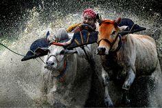 Magical Indian Monsoon