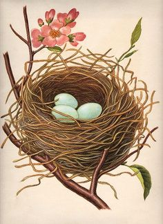 Nest w/Robin's Eggs - The Graphics Fairy