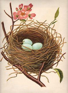 Nest w/Robin's Eggs - The Graphics Fairy
