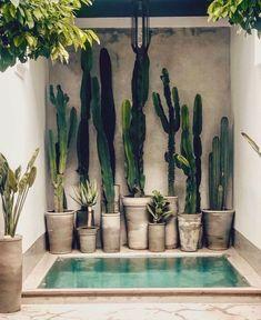 For cactus lovers everywhere via 🌵 📷 / design at . Cactus Plants, Cactus Art, Succulent Planters, Concrete Planters, Cactus Flower, Succulents Garden, Cactus Drawing, Flowers Garden, Hanging Planters