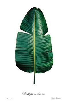Fashion High Quality Cotton Linen Africa Tropical Plant Banana Leaf Decorative Throw Pillow Case Cushion Cover Sofa Home Decor Throw Pillow Cases, Decorative Throw Pillows, Art Encadrée, Poster Photography, Poster Online, Edition Limitée, Leaf Images, Framed Prints, Art Prints