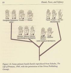 Primate Hand Tree