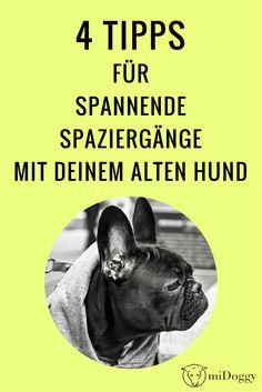 Spannender Spaziergang | alter Hund | Tipps | Ideen