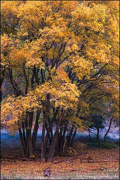 ✯ Autumn in Zion National Park