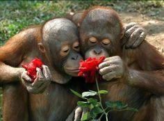 Любовь-это...???