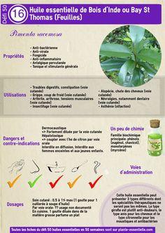 Huile essentielle Menthe poivrée: propriétés et utilisation