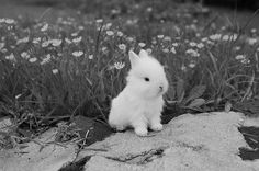 Tiny Bunny- if my favorite little sister used social media i would share this with her. snail mail just seems like such an effort for a tiny bunny. Tiny Bunny, Baby Bunnies, Cute Bunny, Easter Bunny, Happy Easter, White Bunnies, Adorable Bunnies, Bunny Rabbits, Easter Eggs