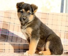 Get A New Puppy Today! View our ADORABLE Newborn Puppies German Shepherd Mix Puppies, Poodle Puppies For Sale, Newborn Puppies, New Puppy, Snuggles, Cute Dogs, Husky, Pets, Animals
