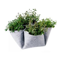 Cootie Catcher - Grey - Equa : When we were kids, we found joy in little things. Like seeking answers to funny questions using a paper-made cootie catcher. Catcher, Planter Pots, Indoor, Grey, Interior, Gray, Repose Gray, Plant Pots