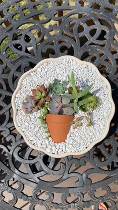 Succulent Gardening, Succulent Terrarium, Planting Succulents, Succulent Garden Ideas, Succulent Bouquet, Succulent Arrangements, How To Make Terrariums, Decoration Plante, Summer Plants