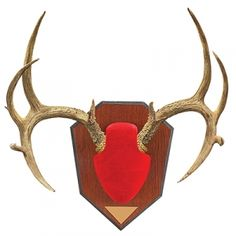 Find the Allen Antler Mounting Kit - Red by Allen at Mills Fleet Farm.  Mills has low prices and great selection on all Accessories. Hunting Gifts, Hunting Gear, Taxidermy Supplies, Antler Mount, Brass Plaques, Do It Yourself Kit, Antlers, Wood Grain, Toms