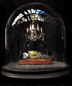 polly morgan, taxidermist in uk. taxidermied animals are road kill or donated by pet owners