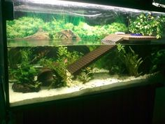 Bi-level tank. Love it! Aquatic Turtle Habitat, Aquatic Turtle Tank, Turtle Aquarium, Aquatic Turtles, Turtle Pond, Aquarium Fish, Turtle Care, Pet Turtle, Turtle Tank Setup