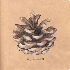 Pine cone. Repinned by www.mygrowingtraditions.com
