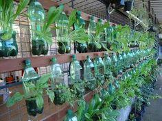 Soda bottle garden.