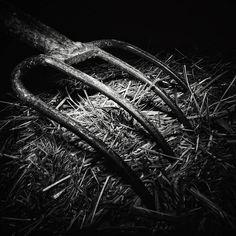 Siete días siete fotos en blanco y negro de tu vida diaria. 4 of 7. Por invitación de mi amada @dscndientdkain #flickr #monochrome #bnw #fork #texture