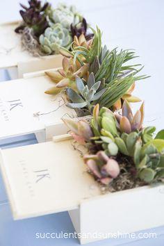 Succulent Centerpieces for a Corporate Event - Succulents and Sunshine