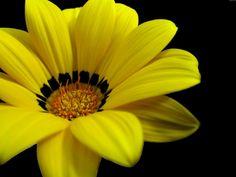 Great Yellow Flower Wallpaper HD For Desktop Wallpaper . Flowers For You, Types Of Flowers, Cut Flowers, Pink Flowers, Fresh Flowers, Yellow Flowers Names, Yellow Flower Pictures, Normal Wallpaper, Wallpaper Desktop