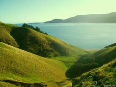View of Man-o-War Bay & Current Basin, French Pass, Marlborough Sounds, NZ (by Larisa Nicholls)
