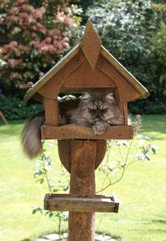 #cats The birds have no hope