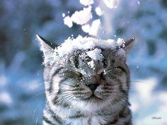 猫に雪のふりかけ - まとめのインテリア