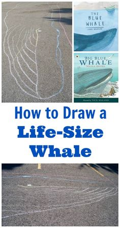 How big is a blue whale? Draw a life size whale and see!  Great outdoor STEM activity -- science & math -- with some fun books about whales!