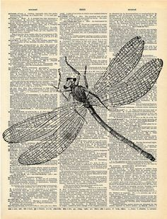 Vintage Dragonfly Illustration Print on vintage antique book page