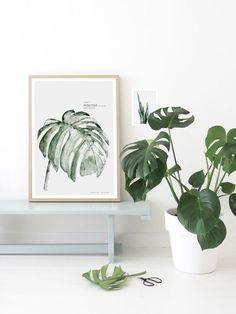 En ce moment j'ai une lubie: les plantes vertes. Mais bien vertes. Qui redonne de la fraîcheur à un intérieur, et sans fleur. Je suis d'ailleurs à la recherche d'un beau Monstera …