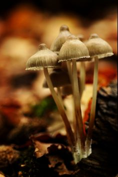 mushroom 2015 #3 - http://www.funsite.eu/2016/11/mushroom-2015-3-2/?utm_source=PN&utm_medium=Pinterest&utm_campaign=SNAP%2Bfrom%2BFunsite.eu