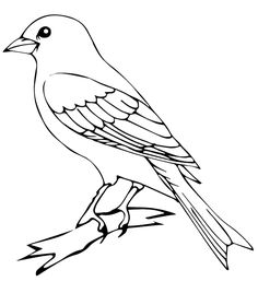 Coloring Pages ! - Make your world more colorful with printable coloring pages. Free coloring pages for adults and kids, from Star Wars to Mickey Mouse Drawing Pictures Of Birds, Bird Drawings, Bird Pictures, Animal Drawings, Cute Drawings, Tattoo Drawings, Pencil Drawings, Bird Coloring Pages, Coloring Books